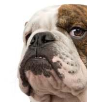 guard-dog2